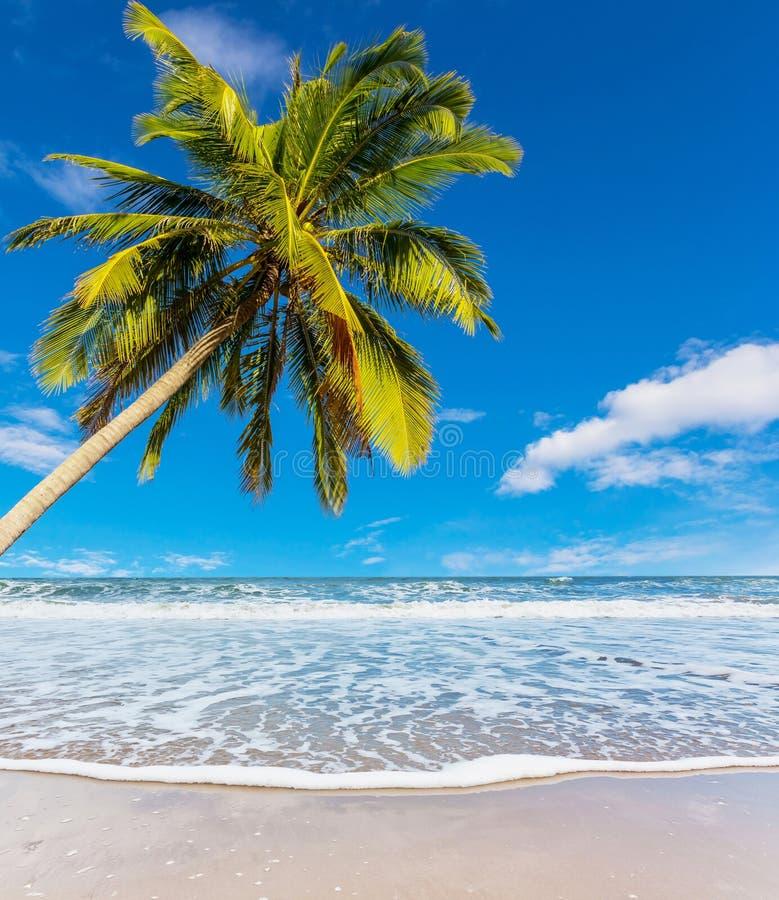 Árvore de coco na praia branca foto de stock