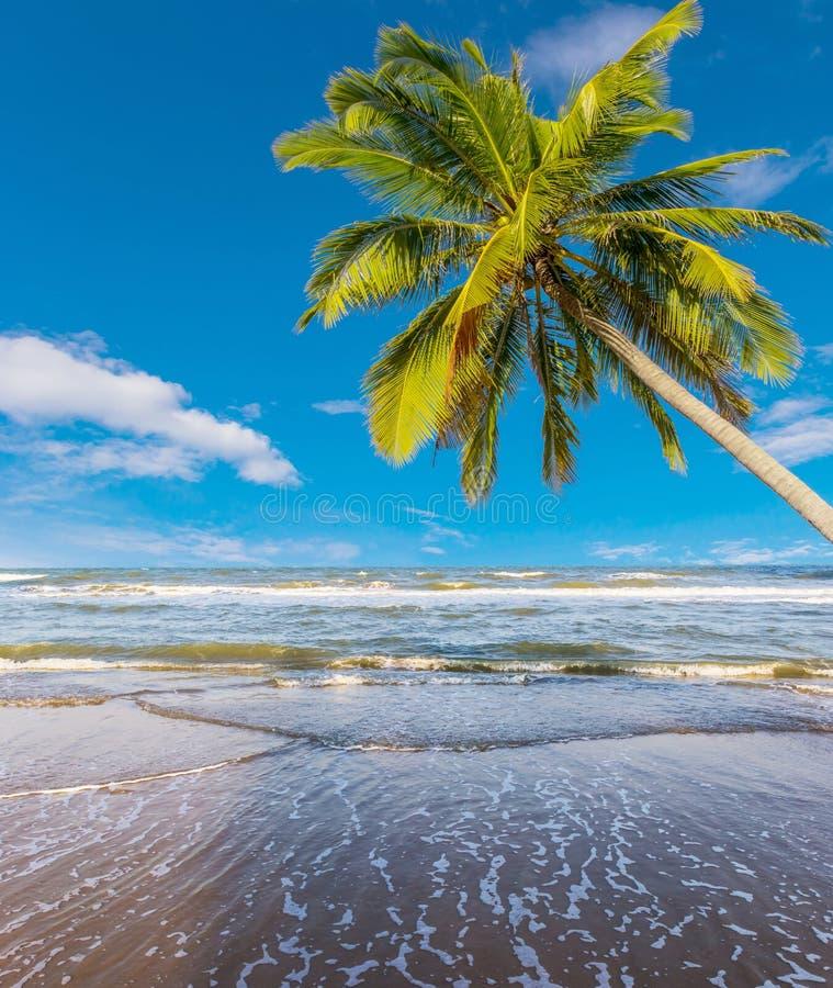 Árvore de coco na praia branca fotos de stock