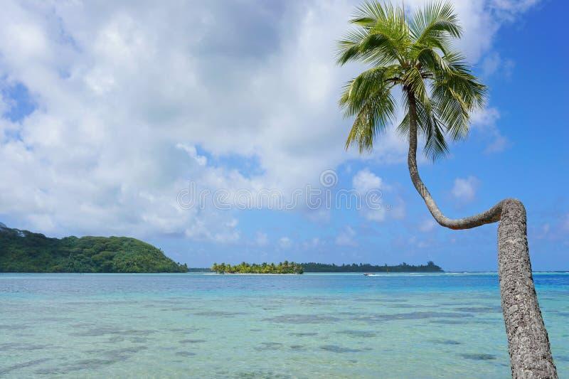 Árvore de coco que inclina-se sobre a lagoa Polinésia francesa fotografia de stock royalty free