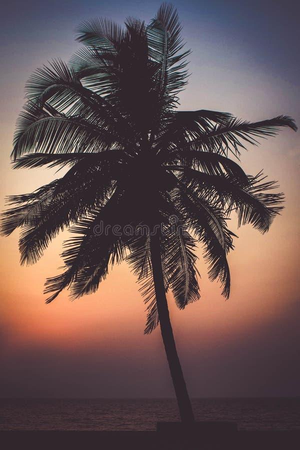 Árvore de coco sozinha do suporte no por do sol fotografia de stock
