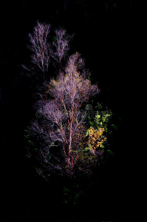Árvore de Colorized na luz do sol imagens de stock