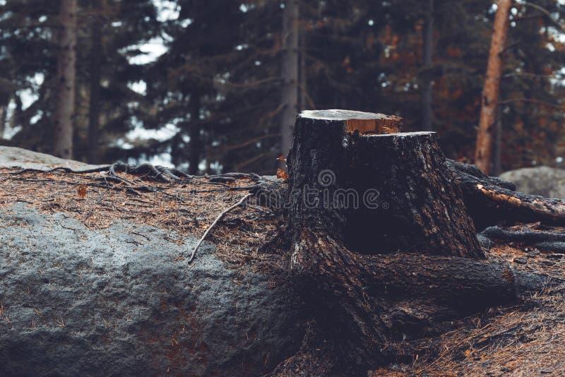 Árvore de Cutted fotos de stock royalty free