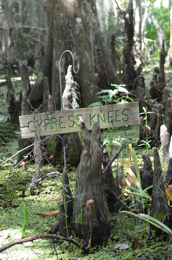 A árvore de Cypress e os usneoides do Tillandsia em Barataria preservam o pântano Orlean novo Louisiana imagens de stock royalty free