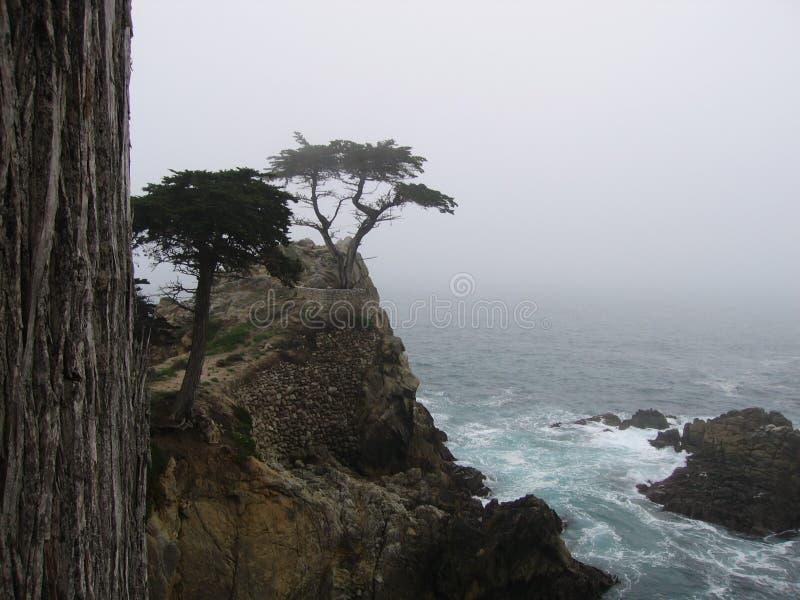 A árvore de Cypress solitária fotografia de stock