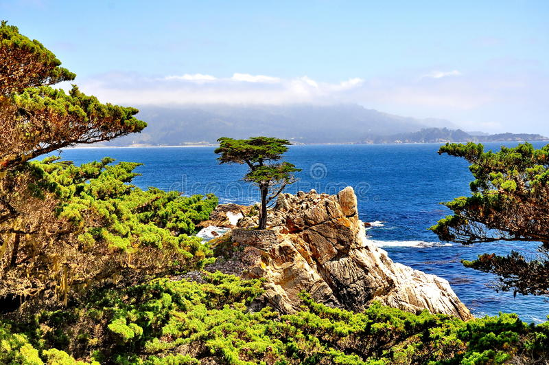 Árvore de Cypress solitária em Pebble Beach em Califórnia imagem de stock royalty free