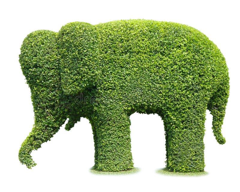 Árvore de elefante fotografia de stock