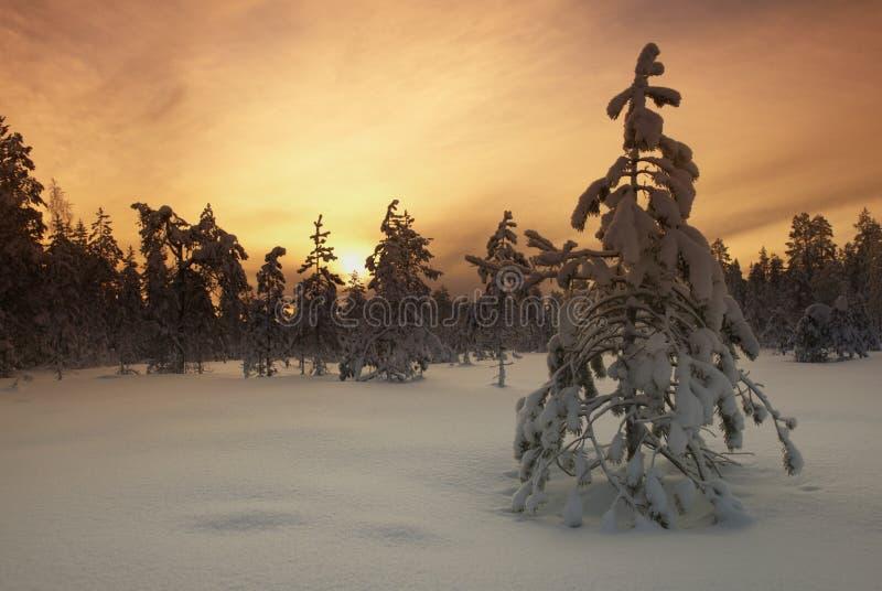 Árvore de Filtred na paisagem invernal imagens de stock royalty free