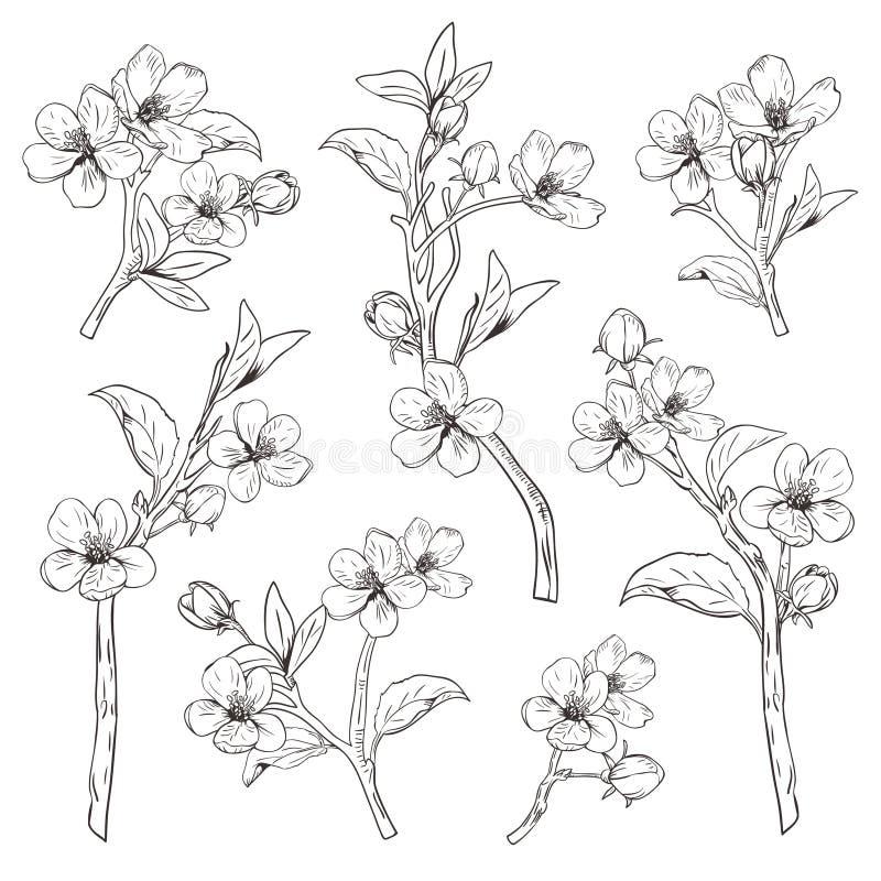 árvore de florescência Ajuste a coleção Entregue ramos botânicos tirados da flor no fundo branco Ilustração do vetor ilustração royalty free