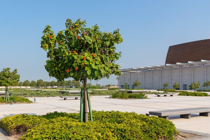 Árvore de florescência bonita perto do Museu Nacional de Barém imagem de stock royalty free