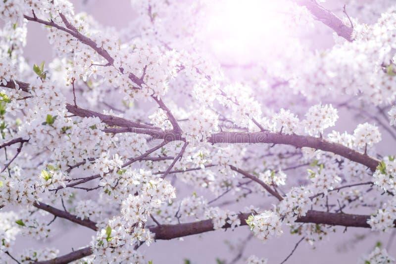 Árvore de florescência com flores imagens de stock royalty free