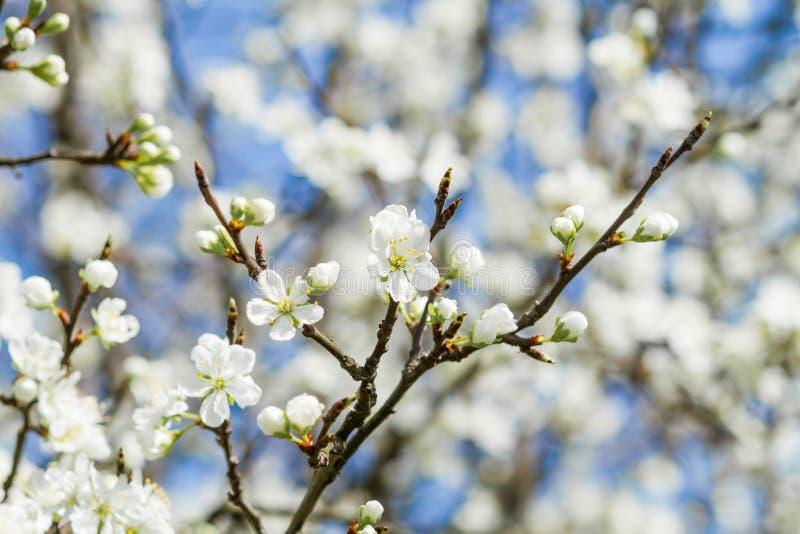 Árvore de florescência com flores imagem de stock