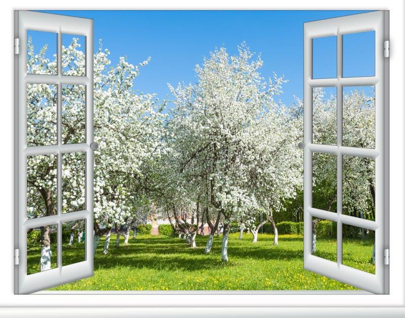 Árvore de florescência da janela da vista imagens de stock
