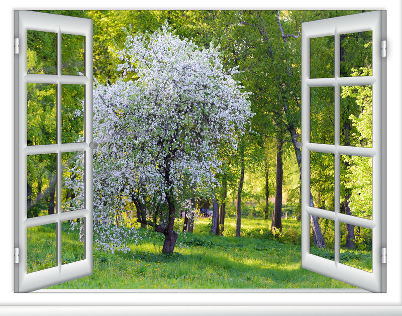 Árvore de florescência da janela da vista fotografia de stock