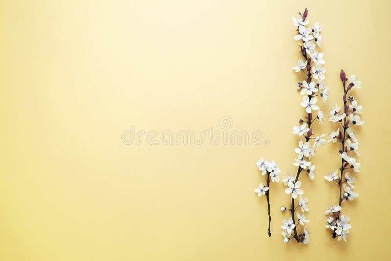 A árvore de florescência da mola bonita com as flores brancas no fundo amarelo O fundo da mola fotografia de stock royalty free