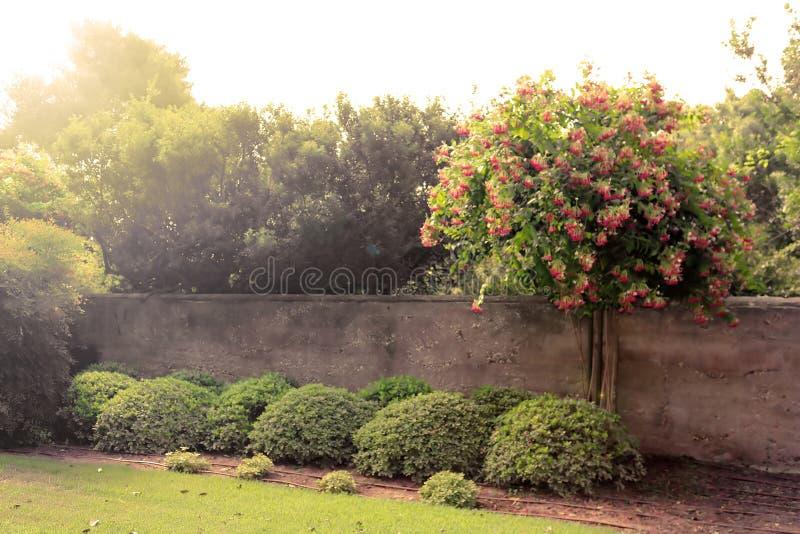 Árvore de florescência em raios do sol no parque Ramat Hanadiv, jardins memoráveis de Baron Edmond de Rothschild, Zichron Yaakov, fotos de stock
