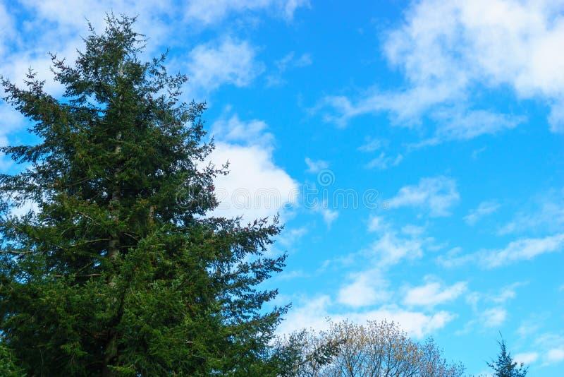 Árvore de floresta com nuvens agradáveis fotos de stock