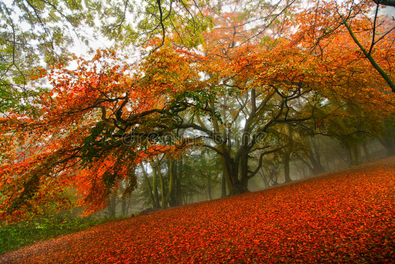 Árvore de floresta do conto de fadas do outono fotos de stock