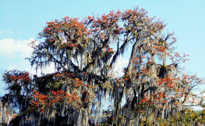 Árvore de floresta tropical na flor imagem de stock