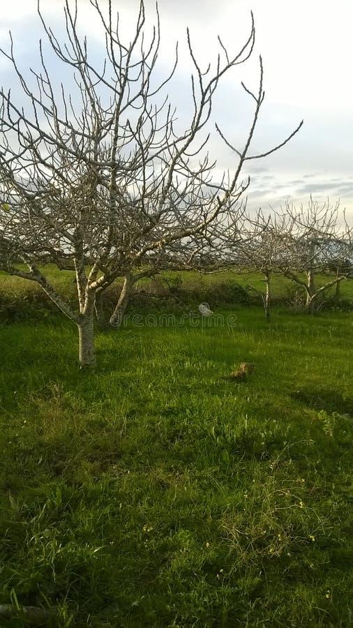 Árvore de fruto foto de stock