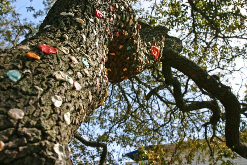 Árvore de goma foto de stock