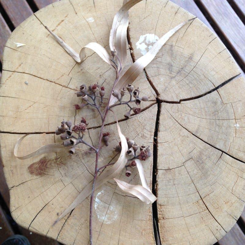 Árvore de goma fora do corte fotografia de stock