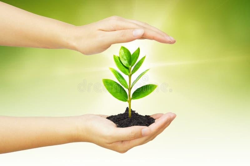 Árvore de Growng fotos de stock royalty free