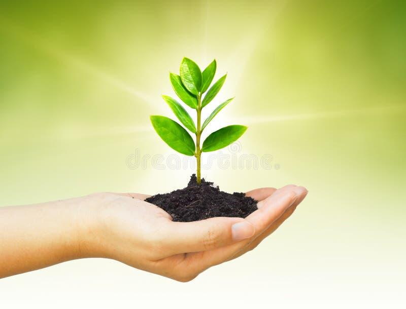 Árvore de Growng foto de stock royalty free