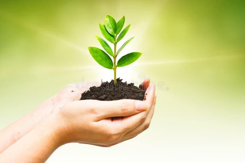 Árvore de Growng fotografia de stock royalty free