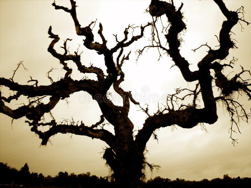 Árvore de Halloween imagens de stock