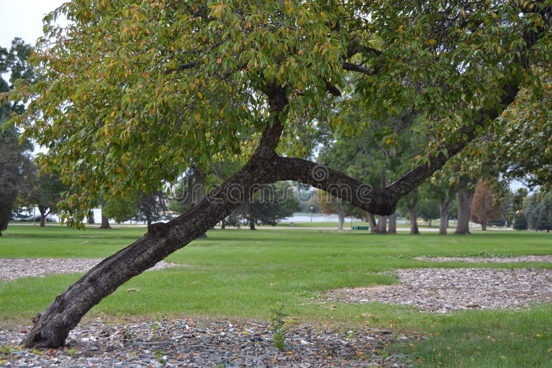 Árvore de inclinação fotos de stock