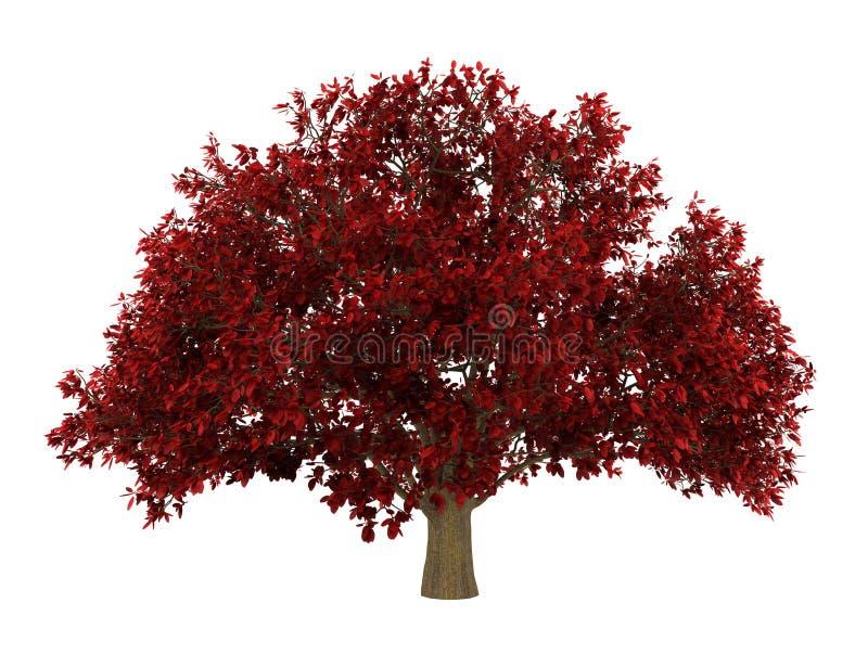 Árvore de ironwood persa isolada no branco ilustração do vetor
