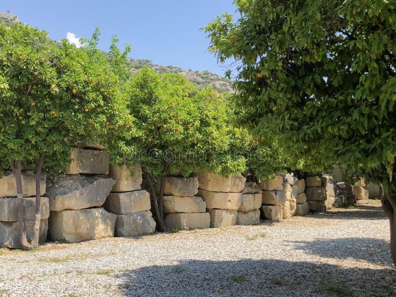 Árvore de laranjas fotos de stock
