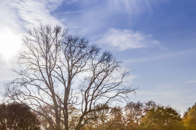 Árvore de Leaveless foto de stock