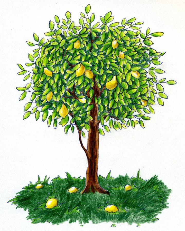 Árvore de limão ilustração do vetor