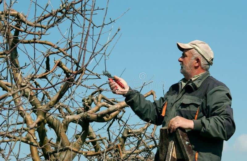 Árvore de maçã de poda fotos de stock royalty free