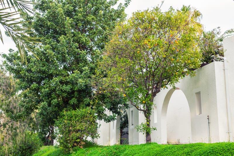 Árvore de mandarino alaranjada com fruto maduro na frente da casa fotos de stock royalty free