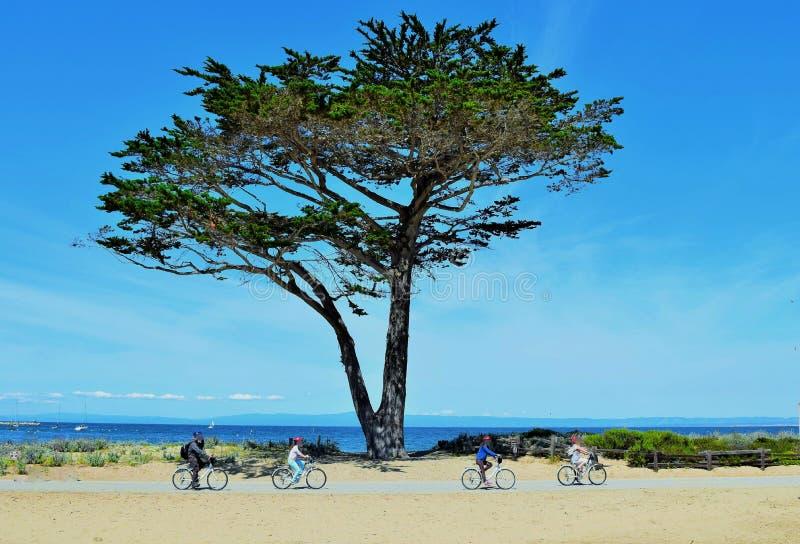 Árvore de Monterey Cypress com ciclistas fotografia de stock royalty free