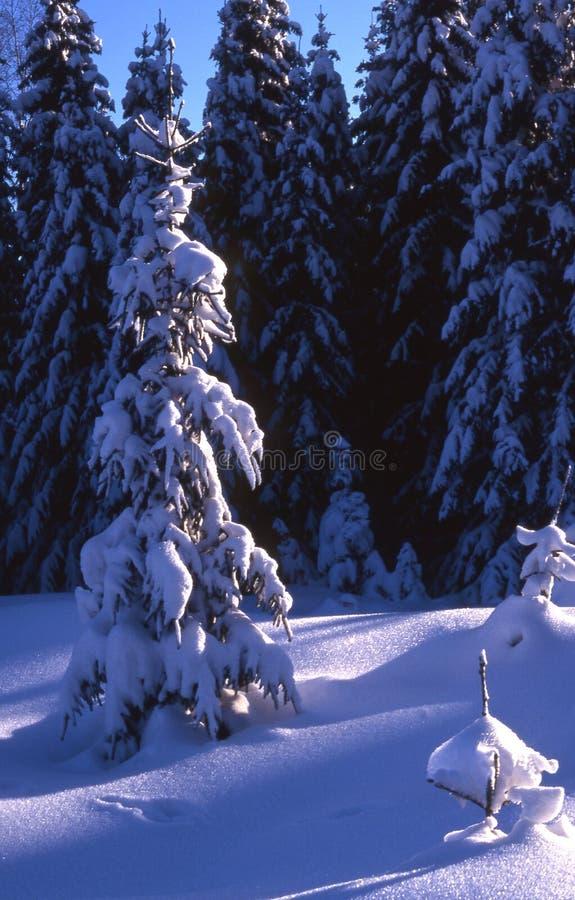 Árvore de Natal. imagens de stock