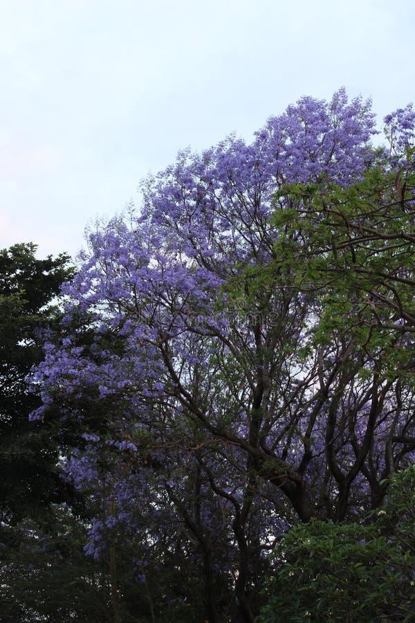 Árvore de Natal africana fotografia de stock