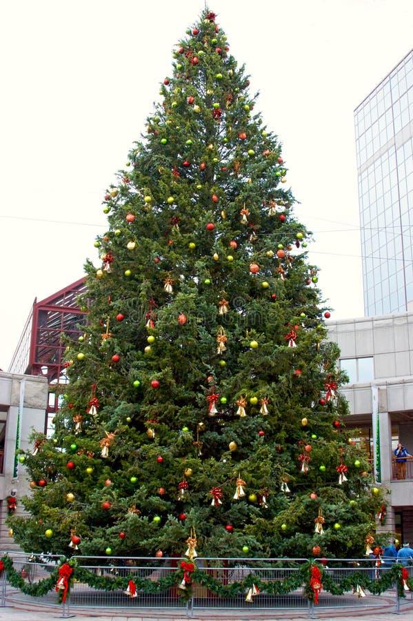 Árvore de Natal de Boston fotos de stock royalty free