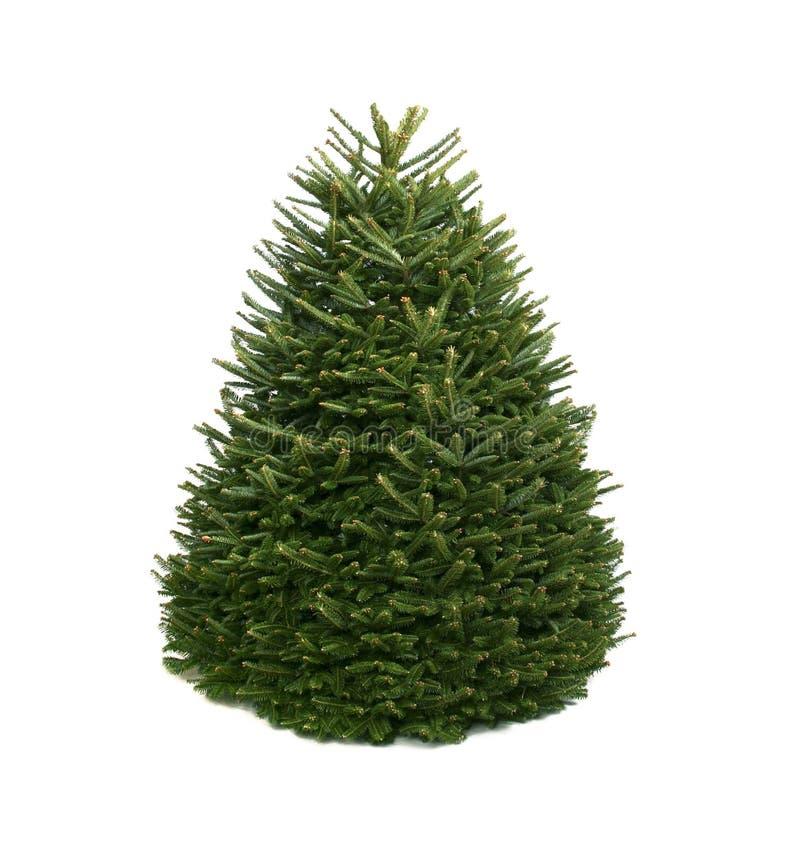 A árvore de Natal desencapada pronta para decorar fotografia de stock royalty free