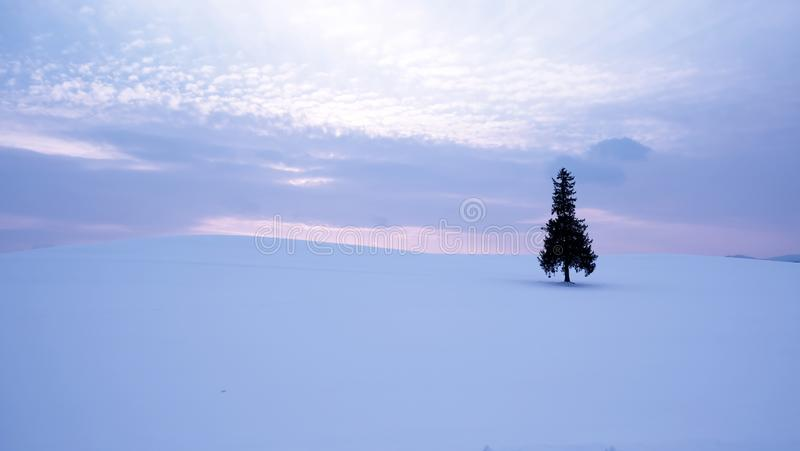 Árvore de Natal do Hokkaido fotos de stock royalty free