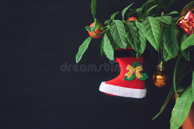 Árvore de Natal do Nightshade com a bota vermelha, a bola e a caixa de presente do Xmas Nightshade verde da planta de potenciômet imagem de stock royalty free
