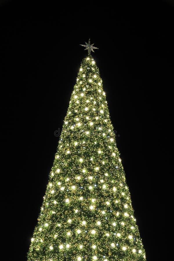 A árvore de Natal enorme ilumina o fundo da noite imagem de stock royalty free