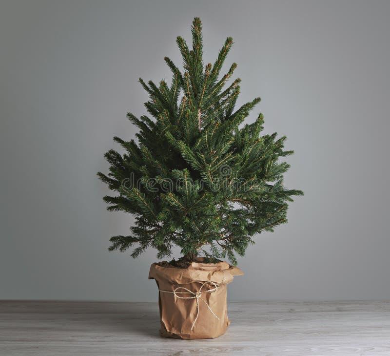 Árvore de Natal luxúria no fundo cinzento fotografia de stock