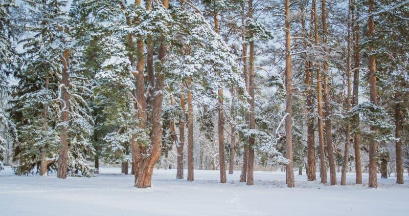 Árvore de Natal mágica da opinião da paisagem do conto de fadas fantástico imagem de stock royalty free