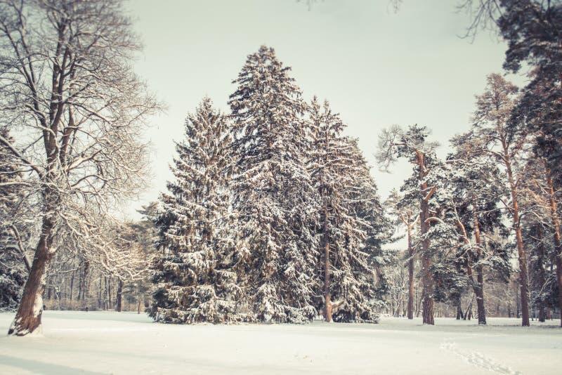 Árvore de Natal mágica da opinião da paisagem do conto de fadas fantástico fotografia de stock royalty free