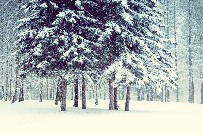 Árvore de Natal mágica da opinião da paisagem do conto de fadas fantástico imagem de stock