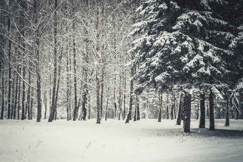 Árvore de Natal mágica da opinião da paisagem do conto de fadas fantástico fotos de stock