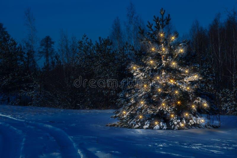 A árvore de Natal na floresta está claramente para fora contra imagem de stock